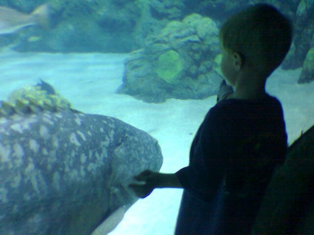 Eddie and the giant grouper