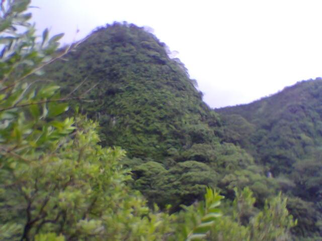 Manoa Falls trail, Hawaii